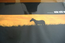 TOMASZ GUDZOWATY. Szaharai utazás fotókönyve, 2004