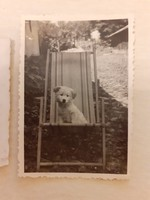 Régi fotó kiskutya fénykép 1940 körül 2 db