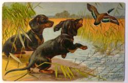 Üdvözlőlap, 1905 előtt (pb: 1905): vadkacsavadászat kutyákkal (tacskókkal)