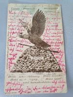 Turul madaras régi képeslap levelezőlap