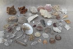 Tengeri kagylók csigák és fosszíliák.