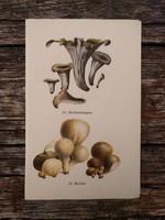 Sötét trombitagomba, Pöfeteg, Rózsáságú és Narancsszínű korallgomba lithográfia nyomat, GOMBA