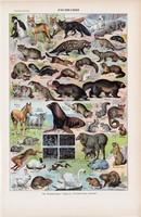 Állatok, színes nyomat 1923, francia, 19 x 29 cm, lexikon, eredeti, szőrme, bunda, ló, róka, birka