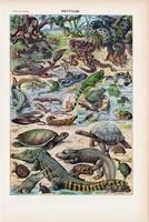 Hüllők, színes nyomat 1923, francia, 19 x 29 cm, lexikon, eredeti, hüllő, kígyó, gyík, teknős