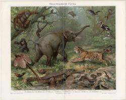 Keleti, ázsiai állatvilág, litográfia 1894, német nyelvű, eredeti színes nyomat, Ázsia, elefánt
