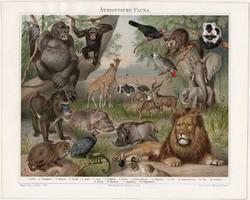 Etiópiai, afrikai állatvilág, litográfia 1894, német nyelvű, Afrika, oroszlán, gorilla, elefánt