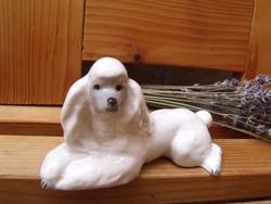 Lomonosov Pudli kutya