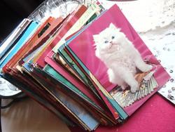 Képeslap gyűjtemény - cicás  (162 színes + 36 db fekete-fehér)