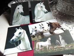 Egyedülálló képeslap gyűjtemény - lovas ( 500 db )