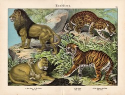 Ragadozók (3), litográfia 1886, német, eredeti, 32 x 41 cm, nagy méret, tigris, oroszlán, jaguár