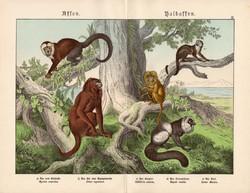 Majmok és félmajmok litográfia 1886, német nyelvű, eredeti színes nyomat, majom, 32 x 41 cm, maki