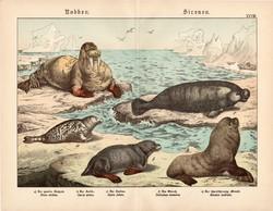 Fóka, rozmár, karibi manátusz, litográfia 1886, német nyelvű, eredeti, 32 x 41 cm, nagy méret, óceán