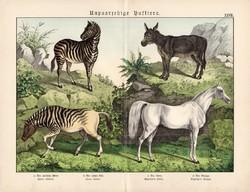 Ló, szamár, zebra, kvagga, litográfia 1886, német nyelvű, eredeti, 32 x 41 cm, nagy méret, patások