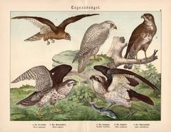 Rétihéja, egerészölyv, halászsas, litográfia 1886, eredeti, 32 x 41 cm, nagy méret, ragadozó madár
