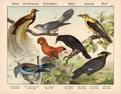 Kakukk, szalakóta, paradicsommadár, beó, litográfia 1886, eredeti, 32 x 41 cm, nagy méret, madár