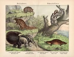 Kacsacsőrű emlős, hangyász, litográfia 1886, német, eredeti, színes nyomat, 32 x 41 cm, nagy méret