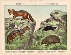 Ragadozók és rovarevők, litográfia 1886, német, eredeti, 32 x 41 cm, nagy méret, sakál, róka, sün