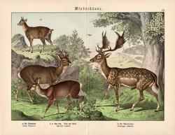 Őz, dámvad, szassza, litográfia 1886, német, eredeti, 32 x 41 cm, nagy méret, patások, szarvas