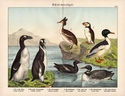 Nagy búkó, vöcsök, lumma, óriásalka, pingvin litográfia 1886, eredeti, 32 x 41 cm, nagy méret, madár