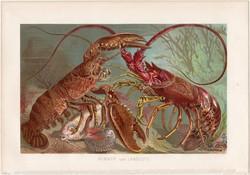 Homár és languszta, litográfia 1884, nyomat, eredeti, német, Brehm, Thierleben, állat, óceán, tenger