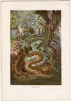 Anakonda, litográfia 1883, színes nyomat, eredeti, Brehm, Thierleben, állat, kigyó, óriáskigyó