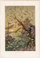 Kérész, litográfia 1884, színes nyomat, eredeti, Brehm, Thierleben, állat, szárnyas rovar, Európa