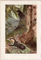 Szarvasbogár és nagy hőscincér, litográfia 1884, nyomat, eredeti, Brehm, Thierleben, állat, bogár