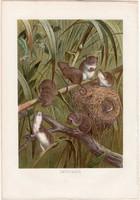 Törpeegér litográfia 1883, színes nyomat, eredeti, Brehm, Thierleben, állat, emlős, egér, Európa
