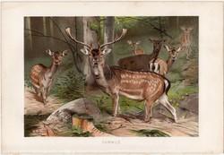 Dámvad, litográfia 1891, színes nyomat, eredeti, Brehm, Tierleben, állat, dámszarvas, szarvas