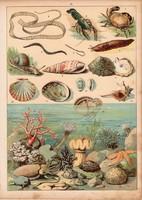 Folyami rák, osztriga, rák, pióca, korall, litográfia 1880, eredeti, 24 x 34 cm, nagy méret, állat