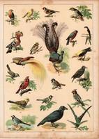 Madár, kékbegy, csíz, varjú, csonttollú, litográfia 1880, eredeti, 24 x 34 cm, nagy méret, állat