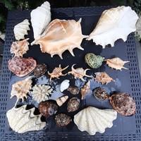 Az Idiai-óceán kagylók, korall, csiga 25 db.