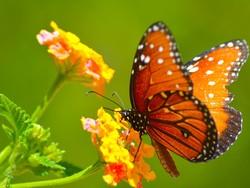 Pillangó; egyedi nagyméretű fotó canvas vászonkép