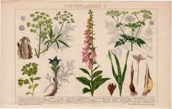 Mérgező növények I., litográfia 1893, színes nyomat, német nyelvű, növény, virág, gyilkos csomorika