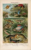 Hüllők, halak, színes nyomat 1905, német nyelvű, eredeti, litográfia, hal, hüllő, állat, folyó, víz