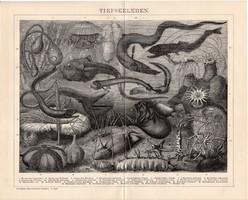 Mélytengeri élővilág, egyszínű nyomat 1894, német, eredeti, Brockhaus, tenger, hal, óceán, állat