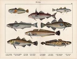 Tőkehal, hekk, északi mennyhal, menyhal, litográfia 1920, eredeti, 32 x 41 cm, nagy méret, hal