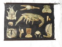 Antik 1902 - 1903 iskolai anatómiai oktató tábla - litográfia vászonra kasírozva - 100 cm x 73 cm