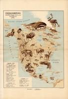 Észak - Amerika állatföldrajzi térkép 1928, magyar nyelvű, 28 x 41 cm, állat, hal, madár, emlős