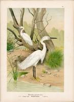 Kis kócsag, litográfia 1897, eredeti, 28 x 39 cm, nagy méret, madár, Európa, színes nyomat, herodias