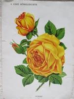 Antik nyomat, biedermeier virágábrázolás A kert című újság műmelléklete - 1.