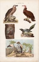 Kuvik, dögkeselyű,és galamb, keselyű, litográfia 1885, eredeti, 26 x 42 cm, madár, állat, nyomat