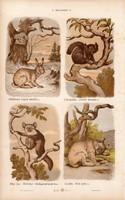 Nyúl, hiúz és egér, hód, csincsilla, litográfia 1885, eredeti, 26 x 42 cm, nagy méret, állat, nyomat