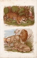 Oroszlán, tigris és párduc, macska, hiéna, litográfia 1885, eredeti, 26 x 42 cm, nagy méret, állat