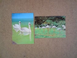 Régi képeslap : Hattyúk és flamingók