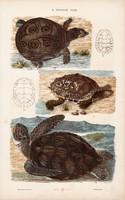 Teknős és aligátor, vipera, kobra, kígyó, litográfia 1885, eredeti, 26 x 42 cm, állat, óceán, víz