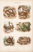 Kigyó, boa, sikló, ostorkígyó és kétéltű, gyík, gőte, litográfia 1885, eredeti, 26 x 42 cm, állat