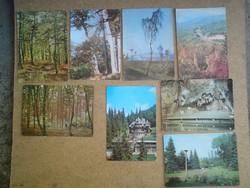 Erdőrészlet és tájkép képeslapok