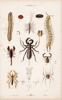 Skorpió, pók, százlábú és pók, dajkapók, atka, litográfia 1885, eredeti, 26 x 42 cm, nagy méret