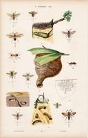 Hangya, hangyaboly és bogár, mogyoróbogár bűzbogár, litográfia 1885, eredeti, 26 x 42 cm, állat